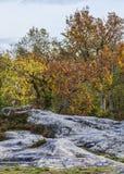Jesieni scena w Fontainebleau lesie Zdjęcia Royalty Free