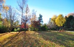 Jesieni scena w Nowa Zelandia Zdjęcia Stock