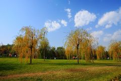 jesieni sceneria Obrazy Stock