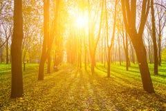 Jesieni sceneria aleja w parku Fotografia Stock