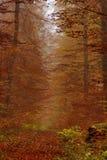 Jesieni sceneria z ośniedziałymi złotymi liśćmi i ranek mgłą Zdjęcia Stock