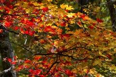 Jesieni Sceniczna przejażdżka wzdłuż Błękitnego grani Parkway w Północnym Caroli zdjęcia stock