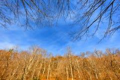 Jesieni Sceniczna przejażdżka wzdłuż Błękitnego grani Parkway w Północnym Caroli obrazy stock