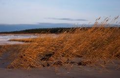 jesienią seacoast Obrazy Royalty Free