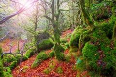 Jesieni Selva De Irati bukowa dżungla w Navarra Pyrenees Hiszpania zdjęcia stock