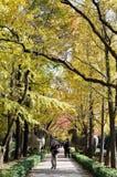 Jesieni senery Zdjęcie Royalty Free