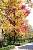 Jesieni senery Zdjęcie Stock