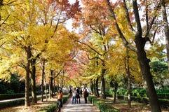 Jesieni senery Zdjęcia Royalty Free