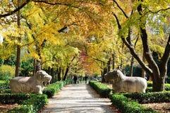 Jesieni senery Fotografia Royalty Free