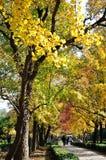 Jesieni senery Obrazy Royalty Free