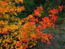 Jesieni serenada Zdjęcia Royalty Free