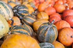 Jesieni sezonowy żniwo banie obraz stock