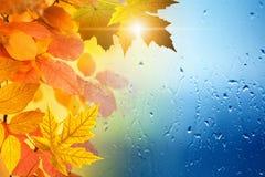 Jesieni sezonowy tło obrazy royalty free