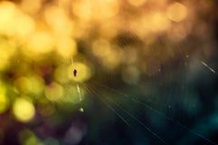 Jesieni sieć Zdjęcie Stock