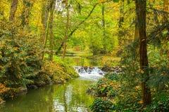 Jesieni siklawa z bluszczem i rzeka Obraz Stock