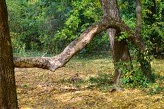 Jesieni skrzywiony drzewo przy ogródem botanicznym zdjęcia stock