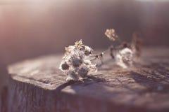 Jesieni smucenie Obraz Royalty Free