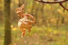 Jesieni spiderweb i liść Zdjęcia Royalty Free