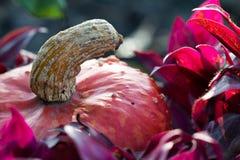 Jesieni spojrzenie przy naturą fotografia stock