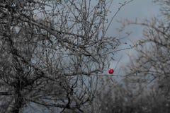 Jesieni spojrzenie przy naturą obraz stock