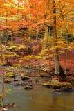 jesienią spokojna rzeka zdjęcie royalty free