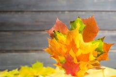 Jesieni sprzedaży pojęcie z liśćmi klonowymi na popielatym drewnianym tle Fotografia Royalty Free