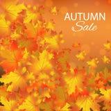 Jesieni sprzedaży wektorowy tło z liśćmi klonowymi Zdjęcia Stock