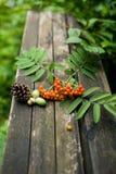 Jesieni stary drewniany tło z naturalnymi elementami Zdjęcia Stock