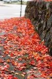 jesienią street Zdjęcie Stock