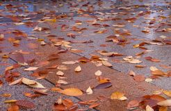jesienią street Obrazy Stock