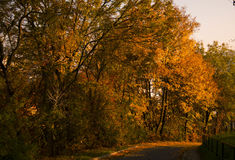 jesienią street Zdjęcie Royalty Free