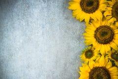 Jesieni sunlflowers rabatowy tło Zdjęcie Stock
