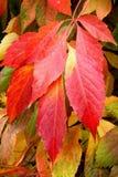 Jesieni szkotowy drzewo jako tło Fotografia Royalty Free