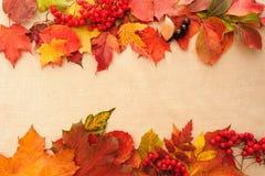 jesieni tła liście Obrazy Royalty Free