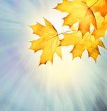 Jesieni tło ilustracji