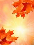 Jesieni tło royalty ilustracja