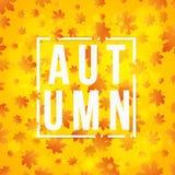 Jesieni tło i biały sztandar z tekstem Pomarańczowi liście klonowy drzewo Cześć, jesień Tło dla twój projekta Abstrakt Obrazy Stock