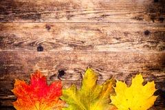 Jesieni tło, kolorowi drzewo liście Zdjęcia Royalty Free