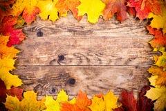 Jesieni tło, kolorowi drzewo liście Fotografia Royalty Free
