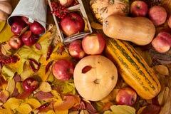 Jesieni tło od żółtych liści, jabłka, bania Sezon jesienny, eco jedzenie i żniwa pojęcie, Fotografia Royalty Free