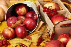 Jesieni tło od żółtych liści, jabłka, bania Sezon jesienny, eco jedzenie i żniwa pojęcie, Zdjęcie Stock