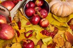 Jesieni tło od żółtych liści, jabłka, bania Sezon jesienny, eco jedzenie i żniwa pojęcie, Obrazy Royalty Free