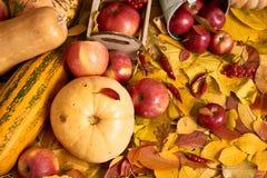 Jesieni tło od żółtych liści, jabłka, bania Sezon jesienny, eco jedzenie i żniwa pojęcie, Zdjęcie Royalty Free