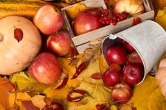Jesieni tło od żółtych liści, jabłka, bania Sezon jesienny, eco jedzenie i żniwa pojęcie, Obraz Stock