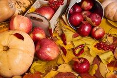 Jesieni tło od żółtych liści, jabłka, bania Sezon jesienny, eco jedzenie i żniwa pojęcie, Obrazy Stock