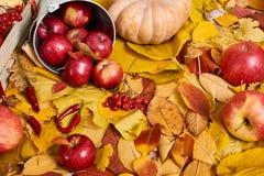 Jesieni tło od żółtych liści, jabłka, bania Sezon jesienny, eco jedzenie i żniwa pojęcie, Obraz Royalty Free