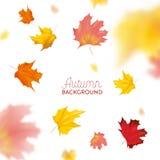Jesieni tło z czerwonymi i żółtymi liśćmi klonowymi Natura spadku projekta Sezonowy szablon dla sieć sztandaru, ulotka, sprzedaż royalty ilustracja