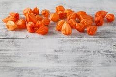Jesieni tło z Delikatną jaskrawą pomarańczową pęcherzycą kno, także Fotografia Stock