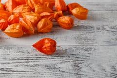 Jesieni tło z Delikatną jaskrawą pomarańczową pęcherzycą kno, także Obraz Royalty Free