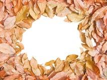 Jesieni tło z kolorowym suszy liście Abstrakt sezonowy Fotografia Royalty Free